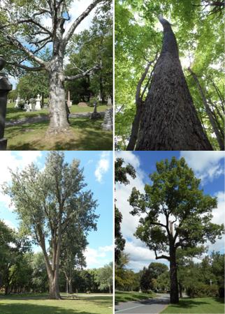 Histoire-arboricole